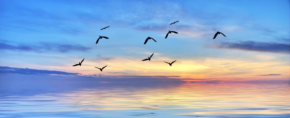 Sentir la pulsion de vie qui nous anime pour rencontrer le meilleur de soi.